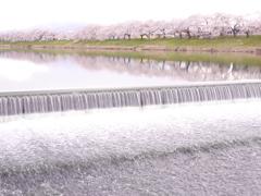 一目千本桜2019