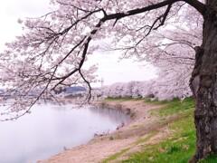 一目千本桜2021Ⅱ