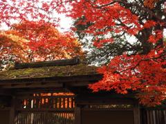 秋の定義山2020Ⅵ