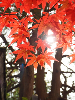 秋の定義山2020Ⅴ