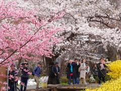 花見山公園2019