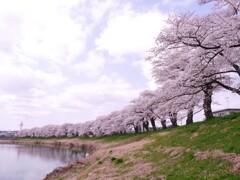 一目千本桜2021Ⅲ