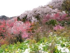 花見山公園2019Ⅲ