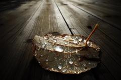 雨上がりの朝Ⅱ