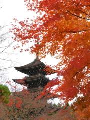 晩秋の西方寺五重塔Ⅱ