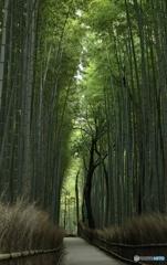 竹とか、たけとか、タケとか、TAKEとか。