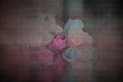 薔薇とか、バラとか、ばらとか、BARAとか。