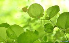 葉っぱラダイス。