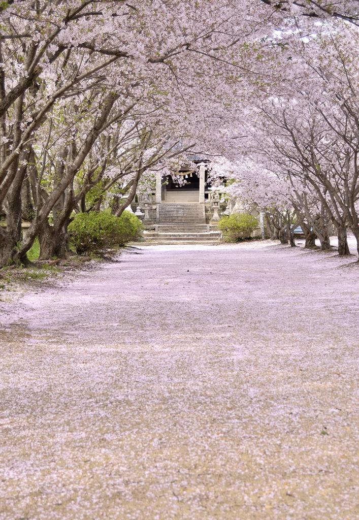 桜が終わっちんぐ。