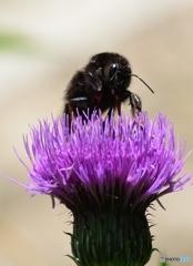 大阪のおばちゃんとハチの撮影は命がけ!