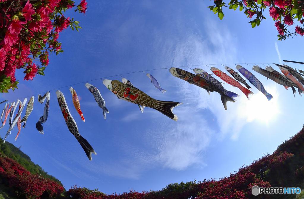 鯉とか、こいとか、コイとか、Koiとか。