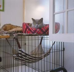 猫部屋で寛ぐ