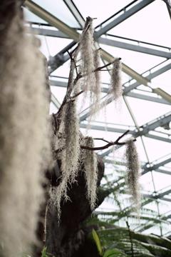 御苑温室 (5)