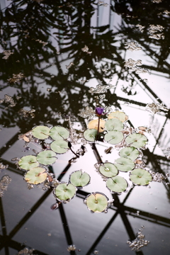 御苑温室 (4)