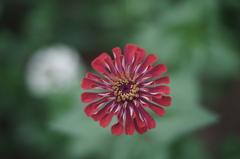 こもれびの里の花
