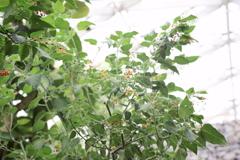 御苑温室 (6)