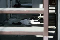 階段の影の猫