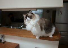 猫じゃらし (4)
