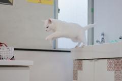 ジャンプ!アナ