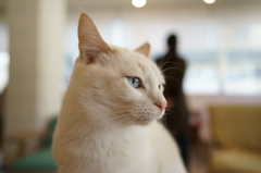 猫式の美ネコ