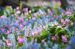 春の宝石箱