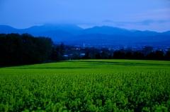 江部乙~夕暮れの菜の花畑
