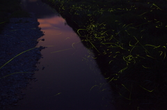 黄昏ランデブー
