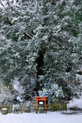 樹齢千年の佇まい