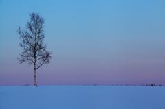 見つけた冬色