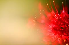 秋告げる花~バリエーション