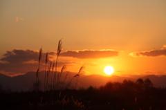 夕日とススキの風景
