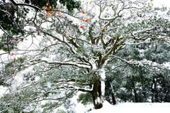 朱白大樹を彩りて