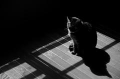 晴天+猫=日向ぼっこ