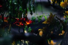 茂み奥のオアシス