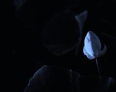 早く咲け♪ 〜1〜