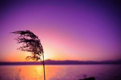 黄昏時、空は焼け落ちる