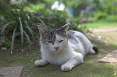 ③さよなら、ノラ猫~つかの間の休息 (103)