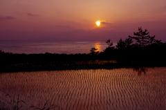 海岸棚田の夕暮れ