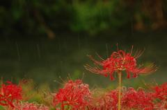 秋雨受けて