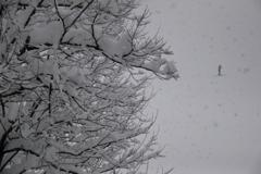 かなりの雪が