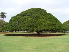 hawaii0501