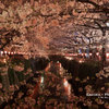 目黒川桜まつり