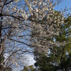 咲いていたので写欲が湧いてきました(^o^)