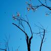 飛ぶモノ達・・・そしてウメ(^_^;)
