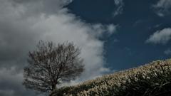 水仙の丘その2