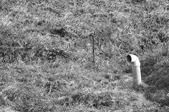 地底人の潜望鏡