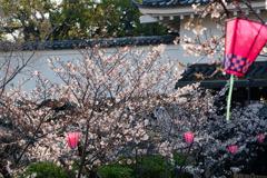 人の少ない桜祭り