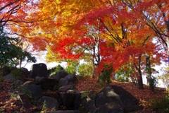 公園の紅葉 3