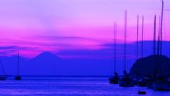 紫色の想い