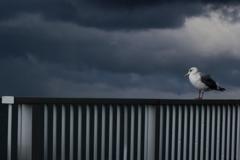 瞑想するカモメ(飛ぶべきか?)